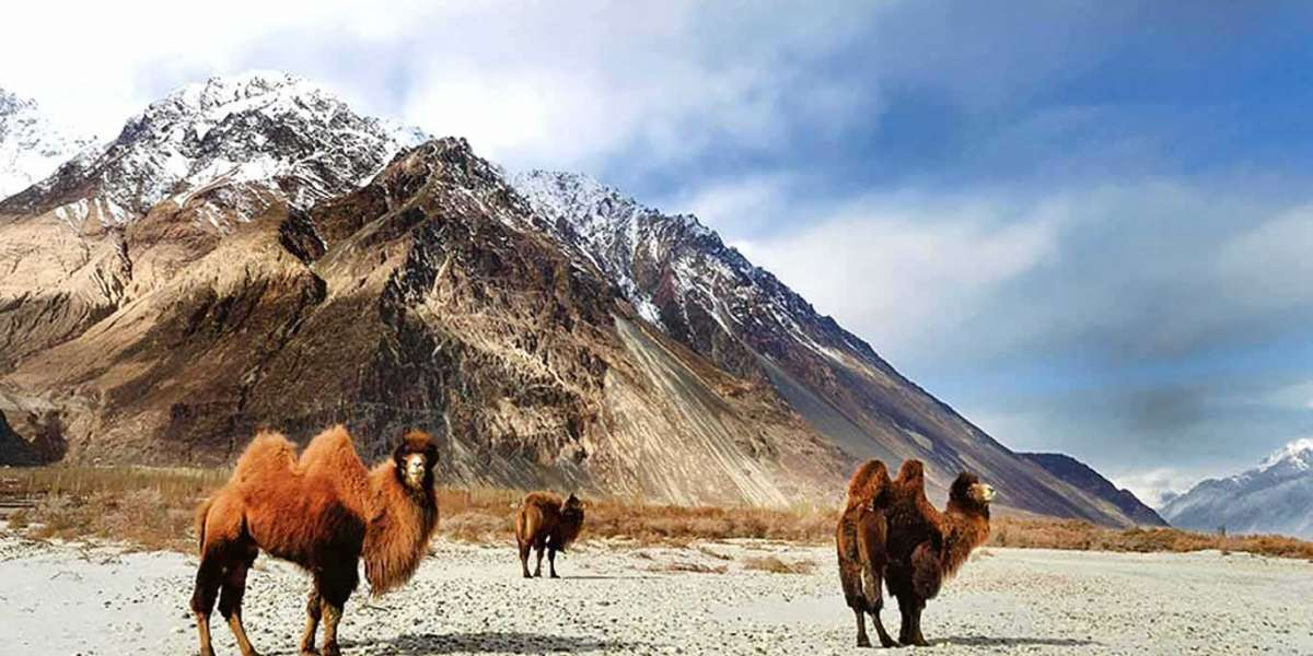 Get Some Shopping Spree Feels With 6 Best Shopping Places in Ladakh