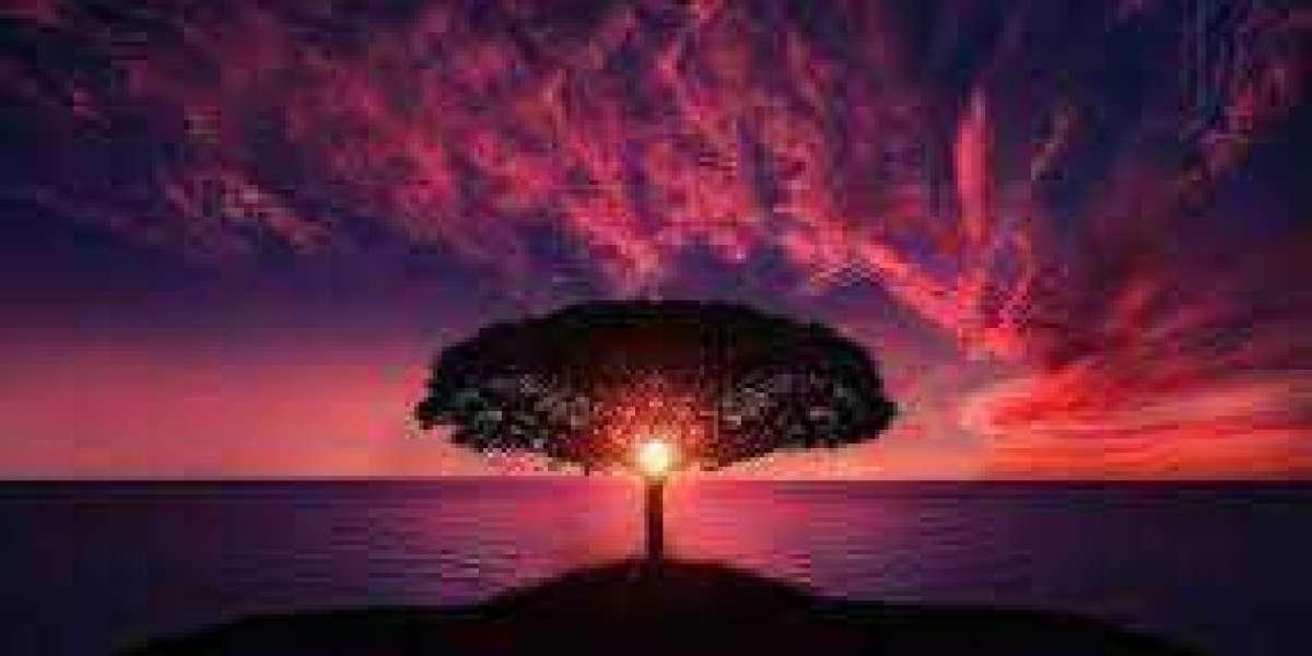 https://www.supplementz.org/living-tree-cbd/