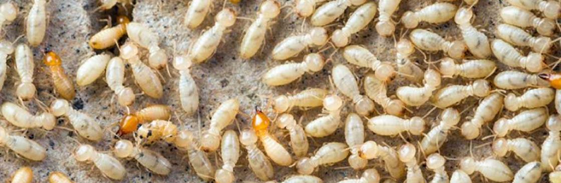 Pest Control Brisbane Cover Image