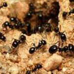 Ants Control Adelaide Profile Picture