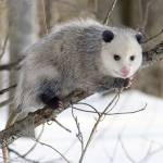 Possum Removal Brisbane Profile Picture